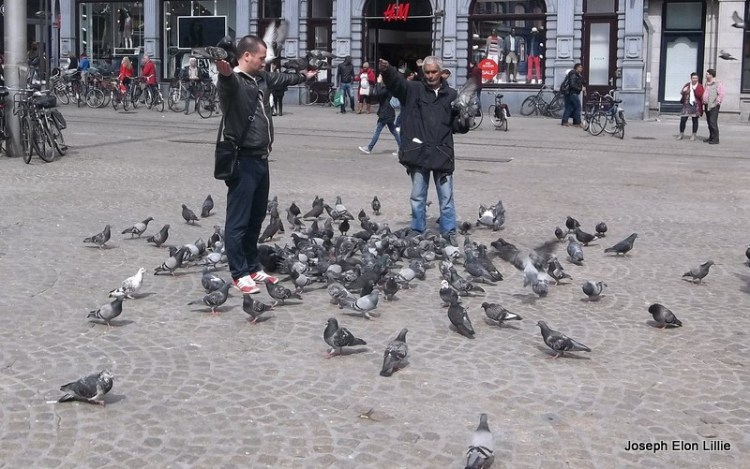 Feed the birds in Dam Square