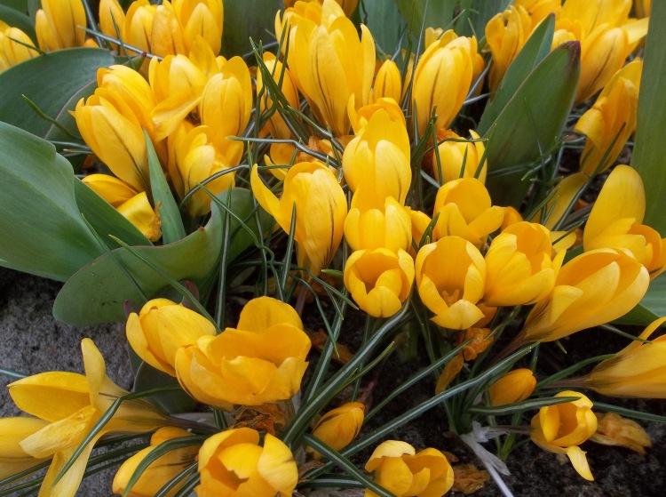 Spring Begins Soon