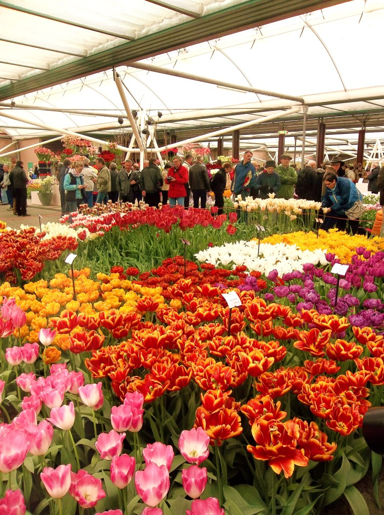 The colors of Keukenhof kept me bright and cheery even though it rained the day we went.