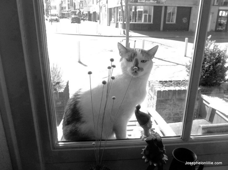 Pretty Kitty was always trying to break into my sister's place in Womerveer.