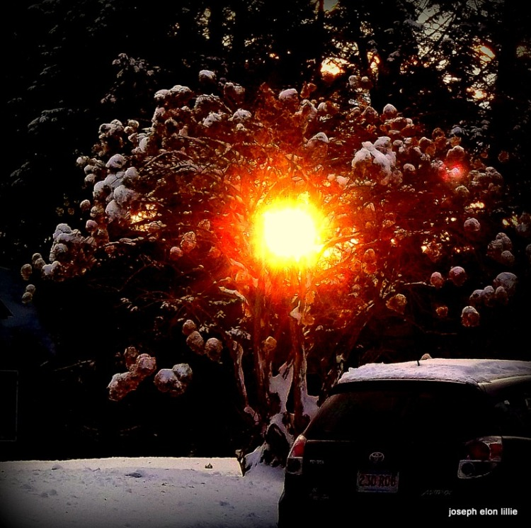 Sun through the winter trees.
