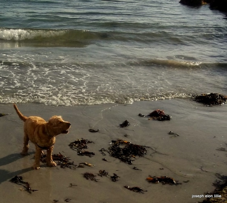 The barking of a dog in the surf